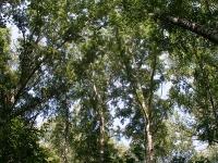Деревья...